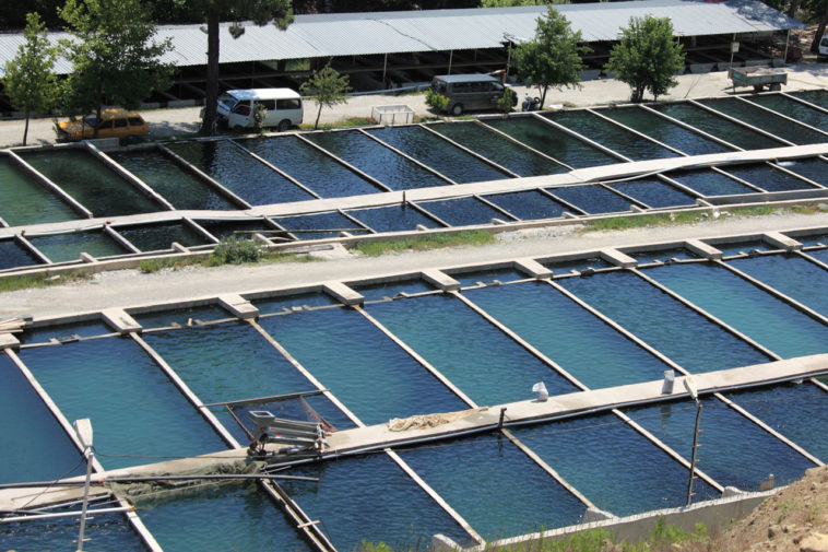 aquaculture, fish farming