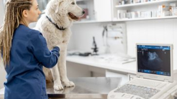 The Leading Challenges Facing Veterinary Medicine
